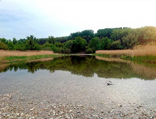 Umweltbaubegleitung im Nationalpark Donau-Auen