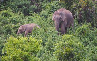 Elefanten im Dschungel von Bangladesch